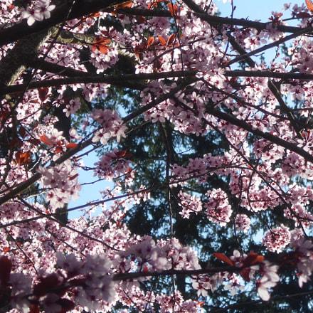 Pink Flowers Series Pt.7, Nikon COOLPIX L30
