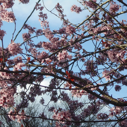 Pink Flowers Series Pt.8, Nikon COOLPIX L30