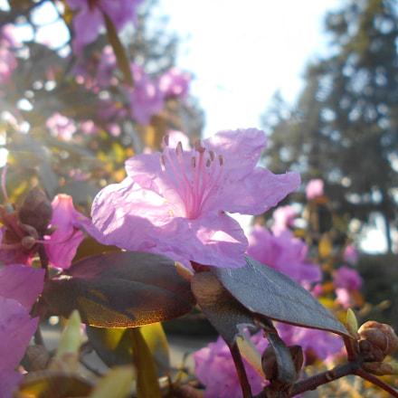 Pink Flowers Series Pt.14, Nikon COOLPIX L30