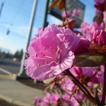 Pink Flowers Series Pt.15, Nikon COOLPIX L30