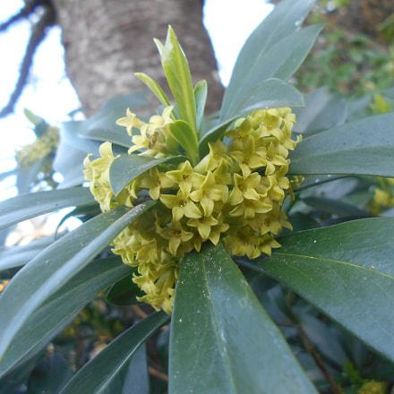 Yellow Flower Power Series, Nikon COOLPIX L30