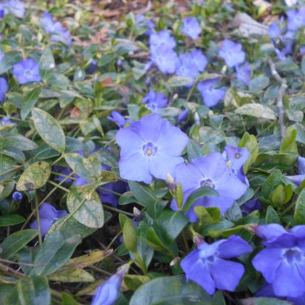 Purple Flower Series Pt.1, Nikon COOLPIX L30