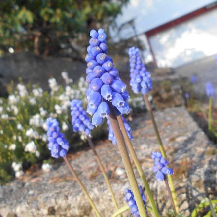 Purple Flower Series Pt.2, Nikon COOLPIX L30