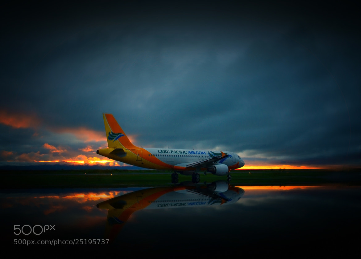 Photograph Early morning flight by Vey Telmo on 500px