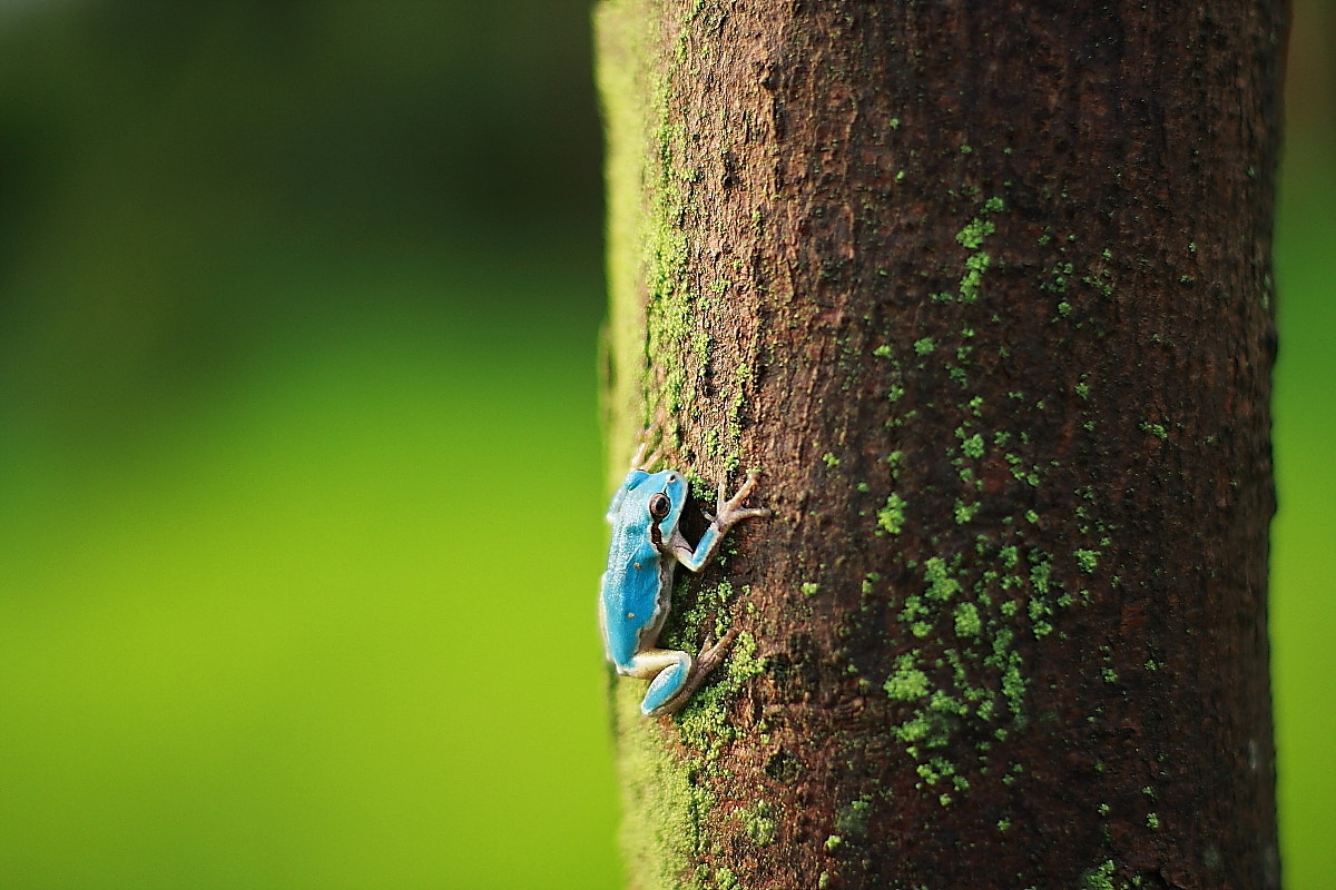 Photograph Sky color frog by choongsung lim on 500px