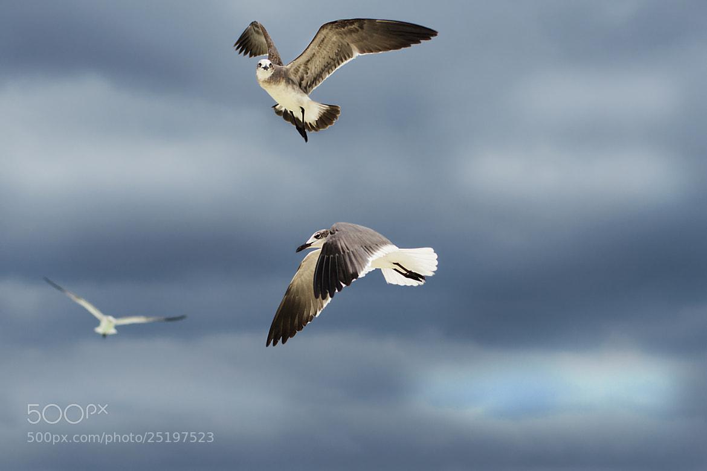 Photograph Gulls by Dmitry Nekhoroshkov on 500px