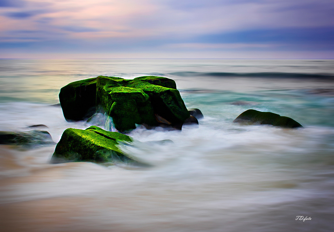 Photograph moss by tam duy on 500px