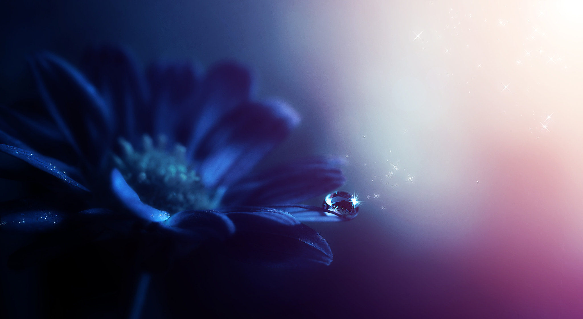 Photograph Morning Flower by Kevin Carden on 500px