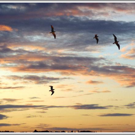 Vol d'oiseaux au lever, Nikon COOLPIX S6500