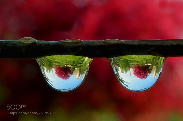 Photograph eyes of the nature (two drops reflection) by tugba kiper on 500px