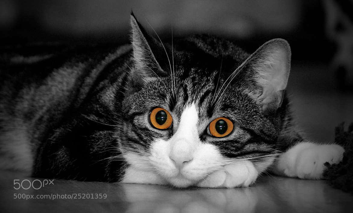 Photograph Cat Eyes by Grit Ende on 500px