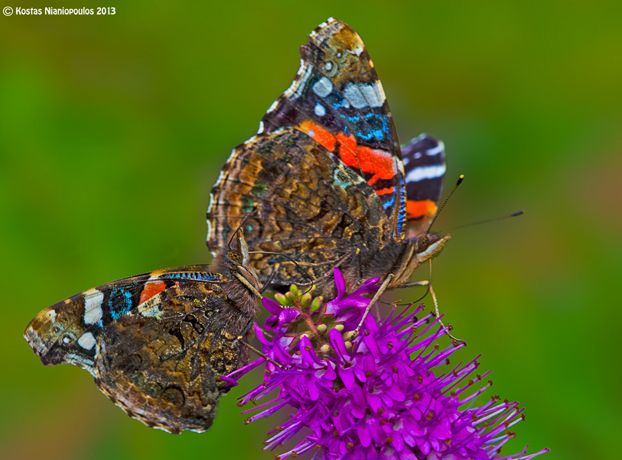 Photograph Small And Large by Kostas  Nianiopoulos on 500px