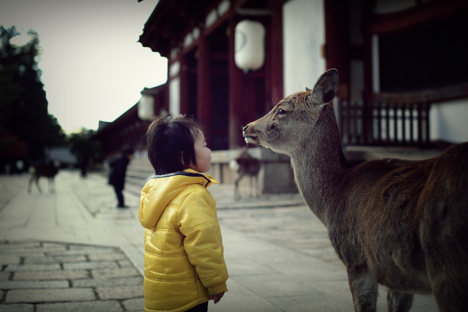 Photograph Nice to meet you, Ms. deer. by MASATO T on 500px
