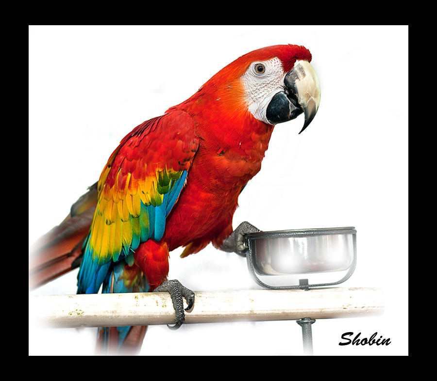 Photograph Macaw by Shobin George on 500px