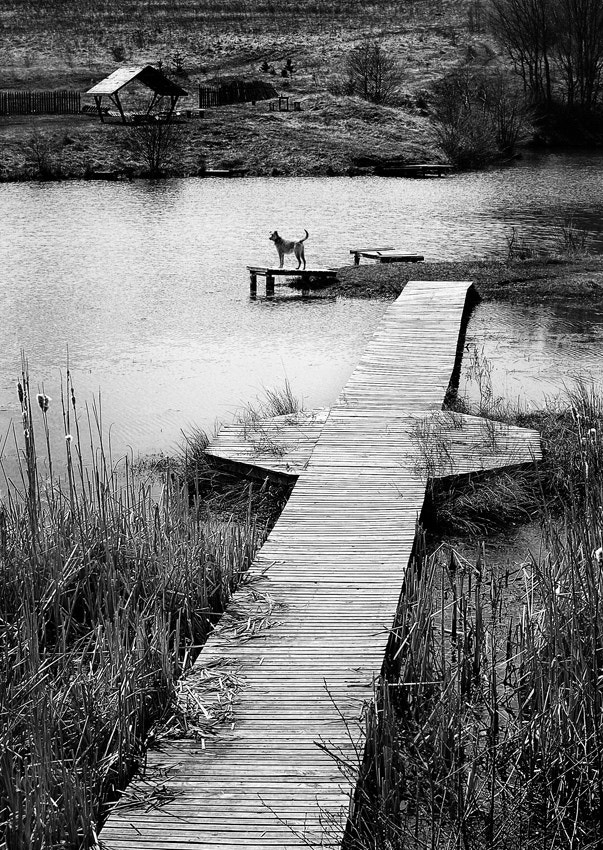 Photograph The lake keeper by Silvia S. on 500px