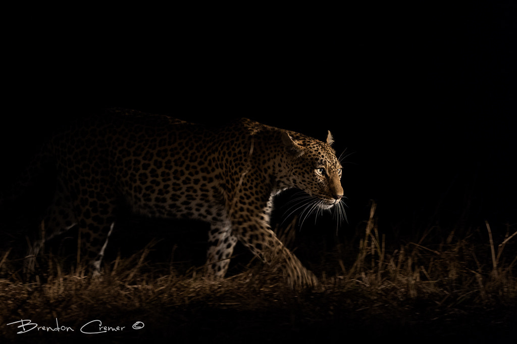 Photograph Silent Hunter by Brendon Cremer on 500px