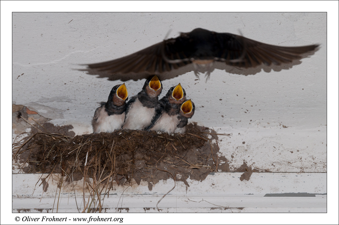 Photograph Hungry II - mom is coming by Oliver Frohnert on 500px