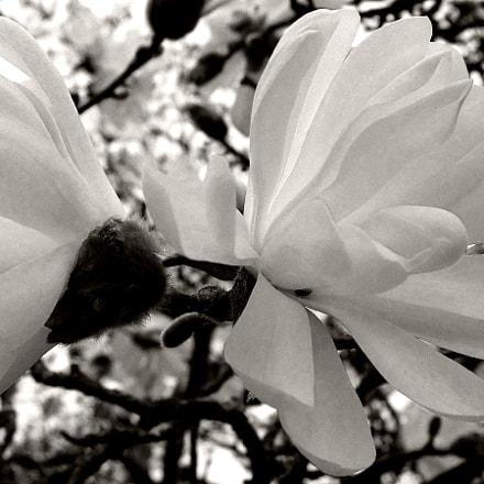 We call it spring, Fujifilm FinePix F31fd