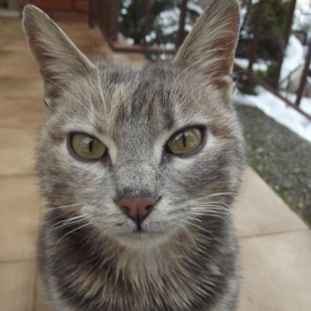 bob cat, Fujifilm FinePix S2950