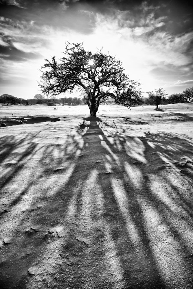 Photograph Sun - Tree - Shadow in the snow by Jan Teeuwen on 500px