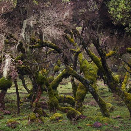 Enchanted forest, Pentax K110D, smc PENTAX-DA 18-55mm F3.5-5.6 AL