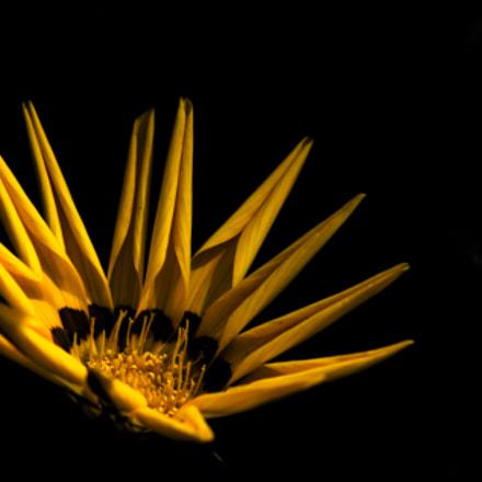 Yellow Swirl, Canon EOS 60D, Canon EF 75-300mm f/4-5.6 USM