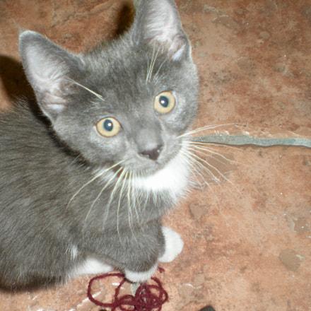 Kitty, Nikon COOLPIX S210