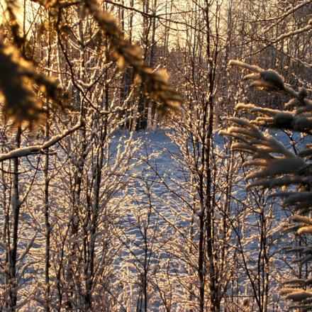 Frozen, Fujifilm FinePix F480