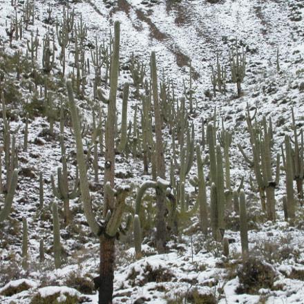 mais snow e cactus, Nikon E4500