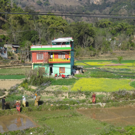 Harvesting the rice in, Sony DSC-TX10