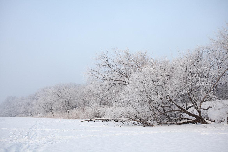 Photograph Hoar Frost by Denis Belyaev on 500px