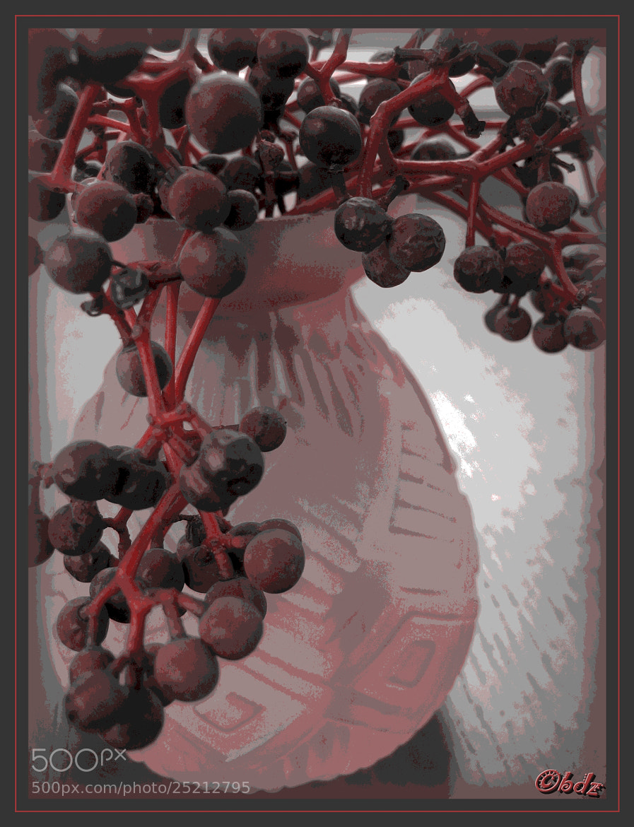 Photograph winter berries II by Betty Ditscheid on 500px