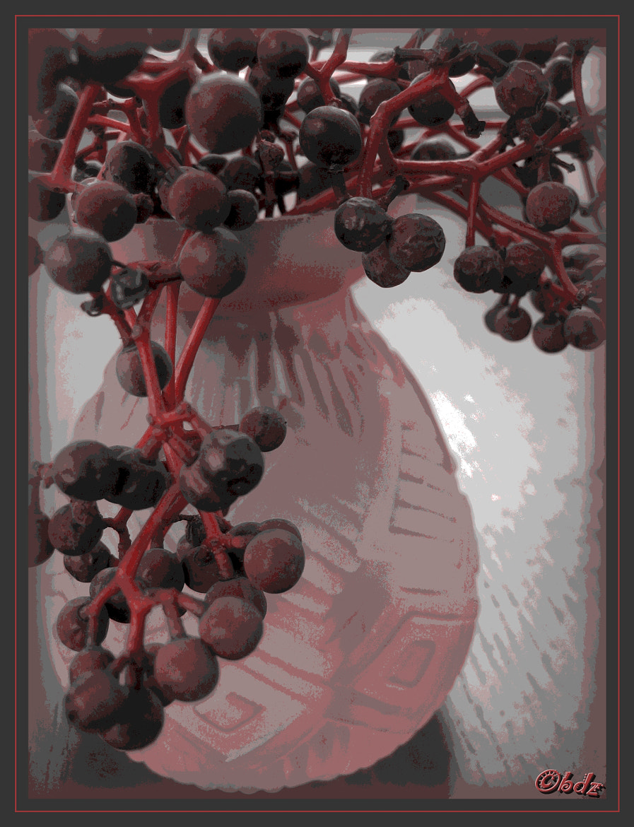 Photograph winter berries II by Betty Ditscheid-Zweers on 500px