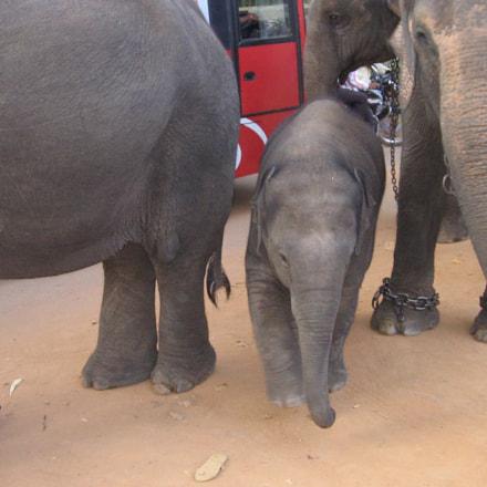 Baby Elephant , Canon POWERSHOT A400