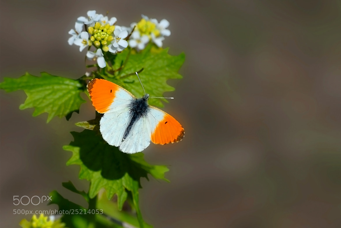 Photograph Butterfly Effect by ilker kursun on 500px
