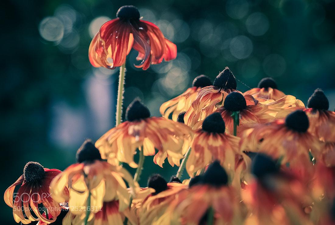 Photograph Morning light by Brane Kosak on 500px
