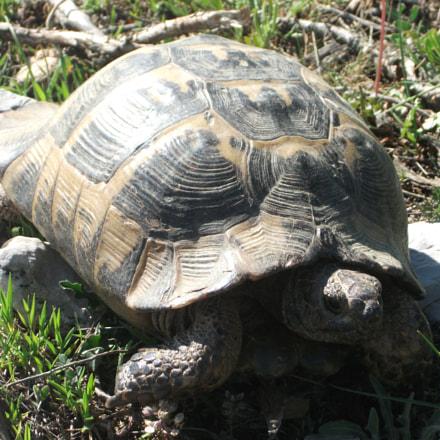 turtle, Fujifilm FinePix J27 J28 J29