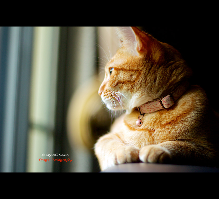 Photograph Bella's Lazy Afternoon by Crystal Dawn on 500px