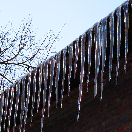 icicle, Canon POWERSHOT A2000 IS