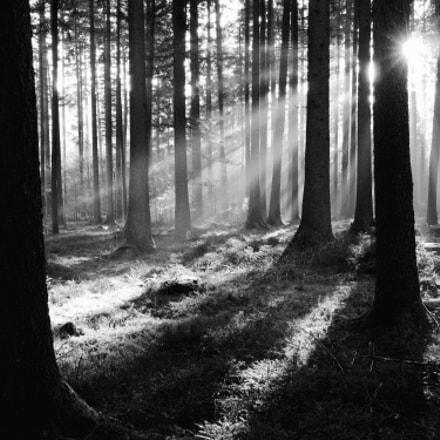 b&w Black Forest, Nikon COOLPIX P7800