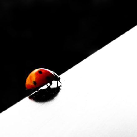 ladybug, Nikon COOLPIX S630