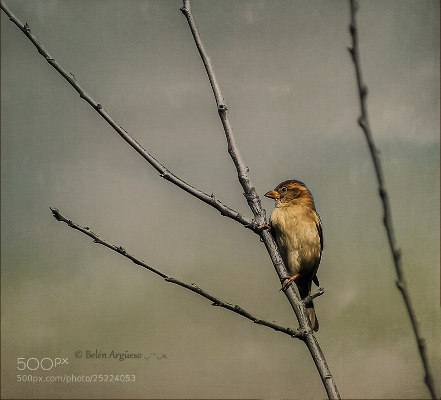 Photograph The bird.... by Belén Argüeso Castelos on 500px