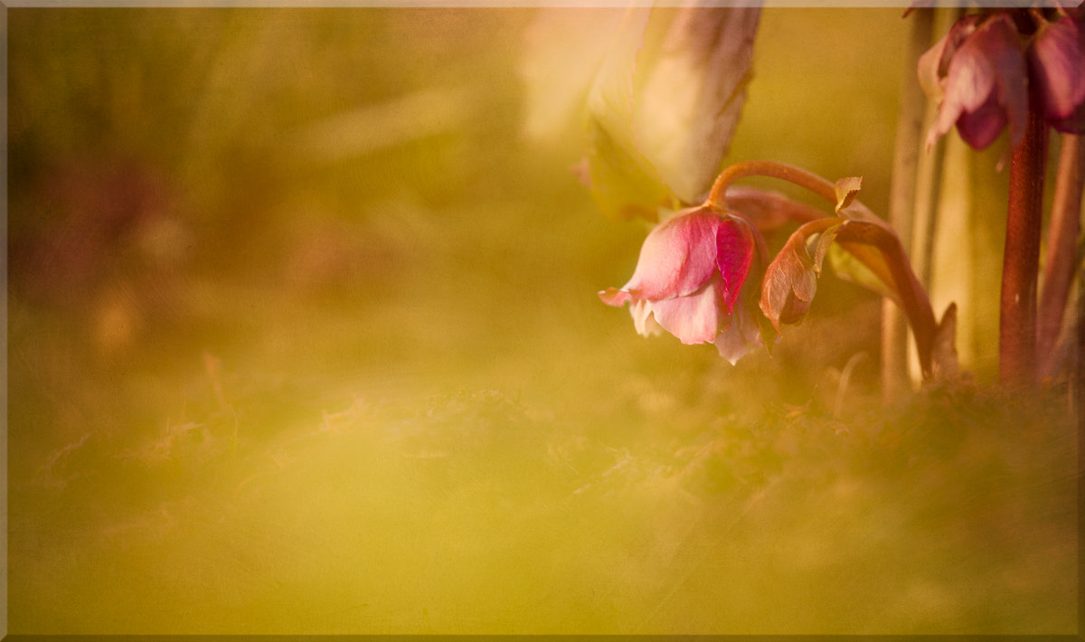Photograph A Touch Of Pink by Penny Myles on 500px
