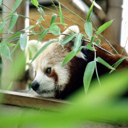 Red Panda, Fujifilm FinePix S1500