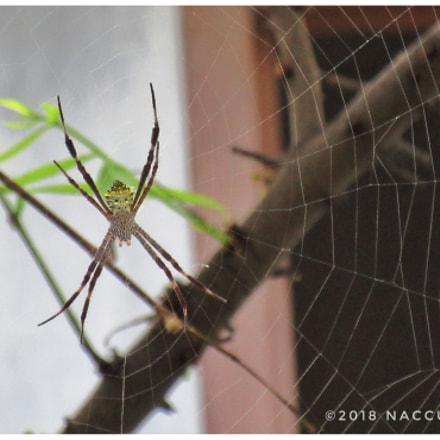 Spider, Canon IXUS 285 HS