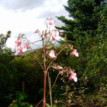 A flower wher I, Fujifilm FinePix A303