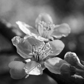 Spring BW