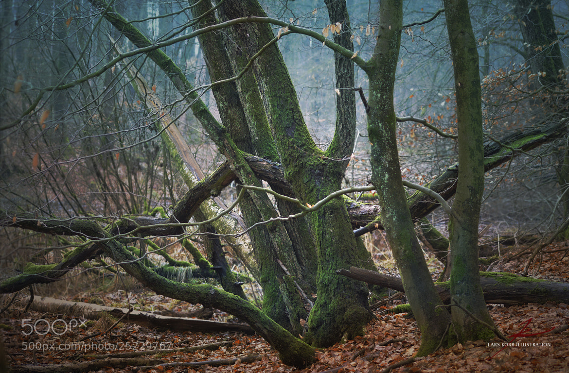 Photograph Branches by Lars Korb on 500px