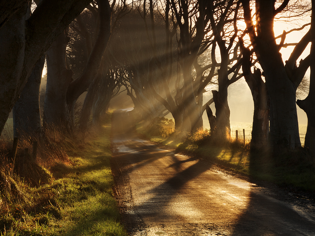 Photograph Early Morning Light by Gary McParland on 500px