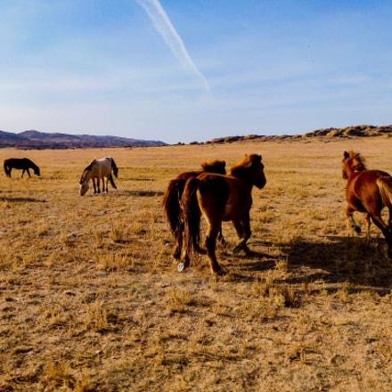 wild horses in gobi, Panasonic DMC-TZ22